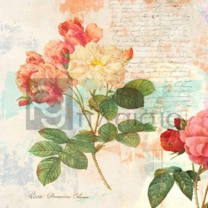 Eric Chestier - Redouté`s Roses 2.0 - I