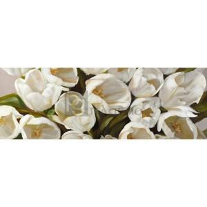 Leonardo Sanna - Tulipani bianchi