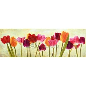 Luca Villa - Tulip parade