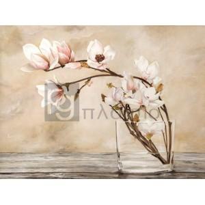 Cristina Mavaracchio - Fiori di magnolia