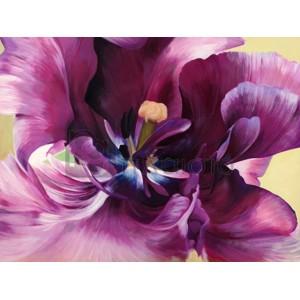 Luca Villa - Purple tulip close-up