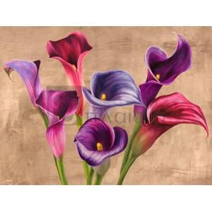 Jenny Thomlinson - Multi-colored Callas