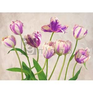Jenny Thomlinson - Tulipes