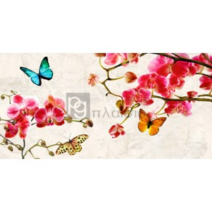 Teo Rizzardi - Orchids & Butterflies
