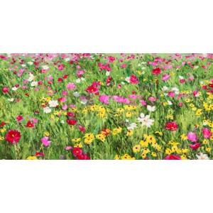 Silvia Mei - Field of Flowers