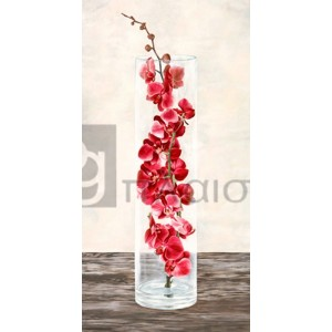 Shin Mills - Arrangement of Orchids