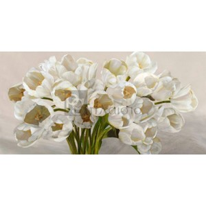 Leonardo Sanna - Tulipes blanches