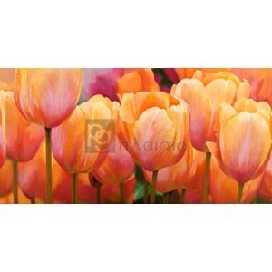 LUCA VILLA - Summer Tulips