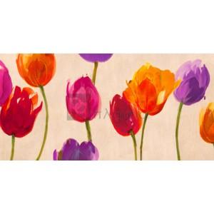 Luca Villa - Tulips & Colors