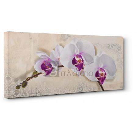 Elena Dolci - Royal Orchid