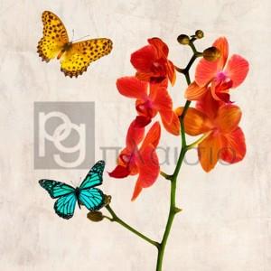 Teo Rizzardi - Orchids & Butterflies II