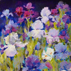 Nel Whatmore - Irresistible Iris
