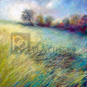 NEL WHATMORE - Feathered Field