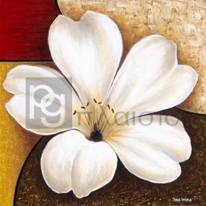 Άννα - Μαρία - Blooming Azalea