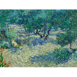 Vincent Van Gogh - Olive Orchard