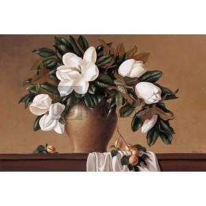 Jordane M. - Magnolia - Apricots