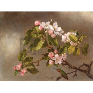 Martin Johnson Heade - Hummingbird and Apple Blossoms