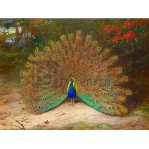 Archibald Thorburn - Peacock and Peacock Butterfly