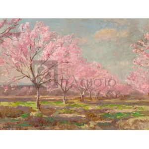 Julian Onderdonk - Peach orchard on Mavericks farm
