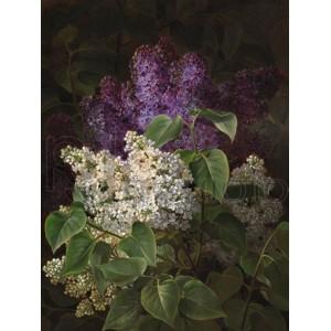 Johan Laurentz Jensen - White and violet lilac