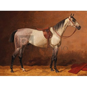 Emil Volkers - Saddled sport horse