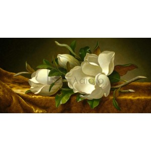 Martin Johnson Heade - Magnolias on Gold Velvet Cloth