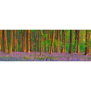 Frank Krahmer - Beech forest with bluebells, Hampshire, England