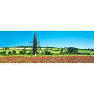 Frank Krahmer - Cypress in poppy field, Tuscany, Italy