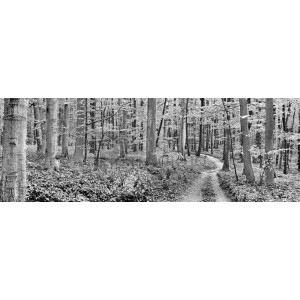 Frank Krahmer - Beech forest, Germany