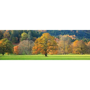 Anonymous - Mixed trees in autumn colour, Scotland