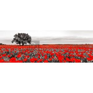Anonymous - Tree in a poppy field