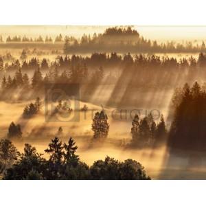 Frank Krahmer - Fog impression at Sindelbachfilz, Bavaria, Germany