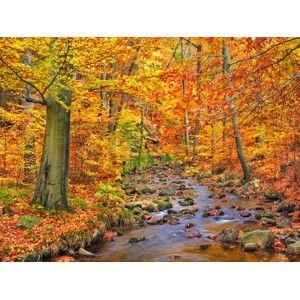 Frank Krahmer - Beech forest in autumn, Ilse Valley, Germany