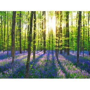 Frank Krahmer - Beech forest with bluebells, Belgium