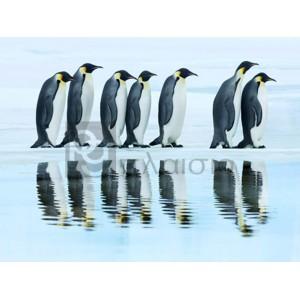 Frank Krahmer - Emperor penguin group, Antarctica