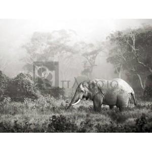 Frank Krahmer - African elephant, Ngorongoro Crater, Tanzania