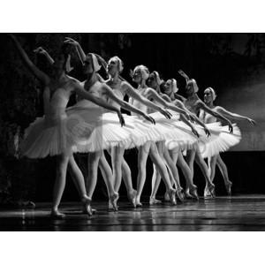 Anonymous - Swan Lake ballet