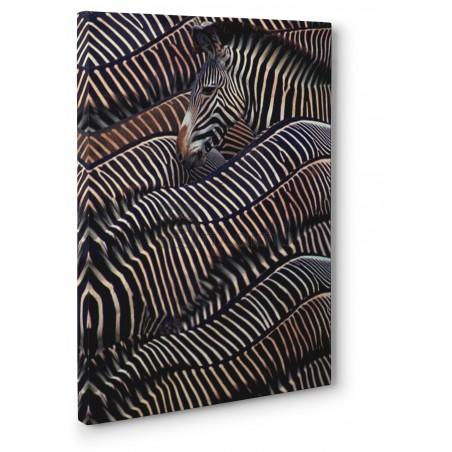 Dli Agency - Zebras in Samburu National reserve, Kenya