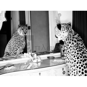 Emma Rian - Cheetah looking in mirror