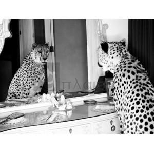 Emma Rian - Cheetah looking in mirror