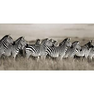 Frank Krahmer - Grant's zebra, Masai Mara, Kenya