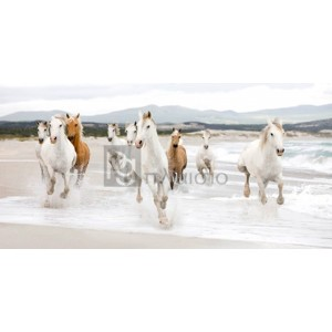 Zero Creative Studio - Horses on the beach (detail)