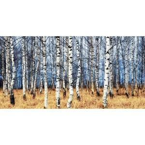 Oleg Znamenskiy - Birch grove in autumn