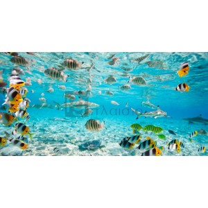 Pangea Images - Fish and sharks in Bora Bora lagoon