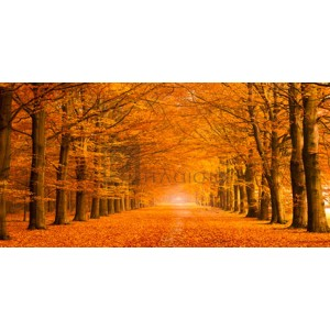 Pangea Images - Woods in autumn