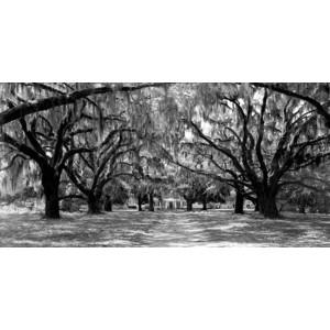 Anonymous - Avenue of oaks, South Carolina