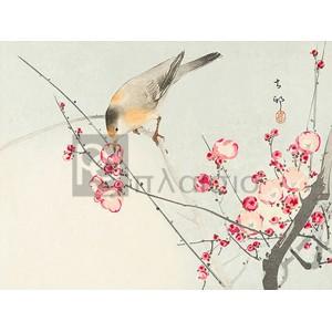Ohara Koson - Songbird on blossom Branch