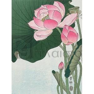 Ohara Koson - Blooming lotus flowers