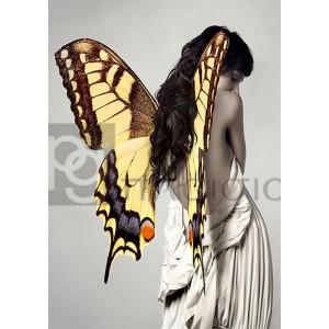 JULIAN LAUREN - Winged Beauty #3