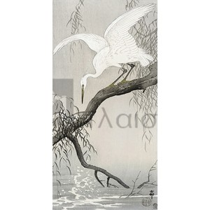 Ohara Koson - White heron on tree branch